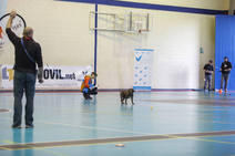 IV Copa de España y Campeonato del Año de perros detectores