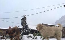 La nieve y el viento ponen en alerta a León este jueves