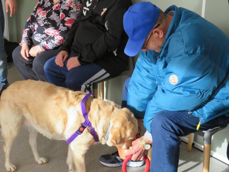 Terapia con perros en Alfaem León