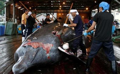 Japón reanudará la caza de ballenas con fines comerciales en 2019