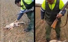 Un cazador pisotea y golpea hasta la muerte a un zorro
