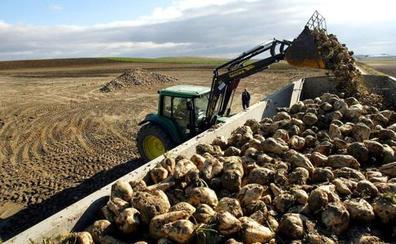 La Junta abonará 10 millones a más de 5.500 remolacheros de la ayuda de 3 euros por tonelada de 2011 que anuló por la crisis económica