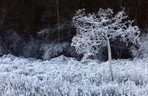 El Bierzo se congela