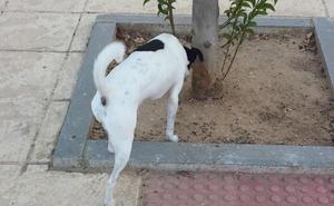El Ayuntamiento de Santa María del Páramo instala papeleras especiales para perros