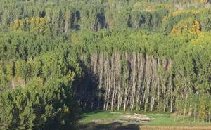 El sector forestal al alza: los contratos en León crecen un 16,8% en los últimos cuatro años