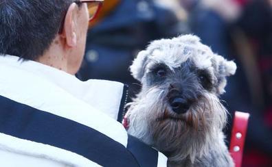 San Antón bendice a sus mascotas en Cacabelos