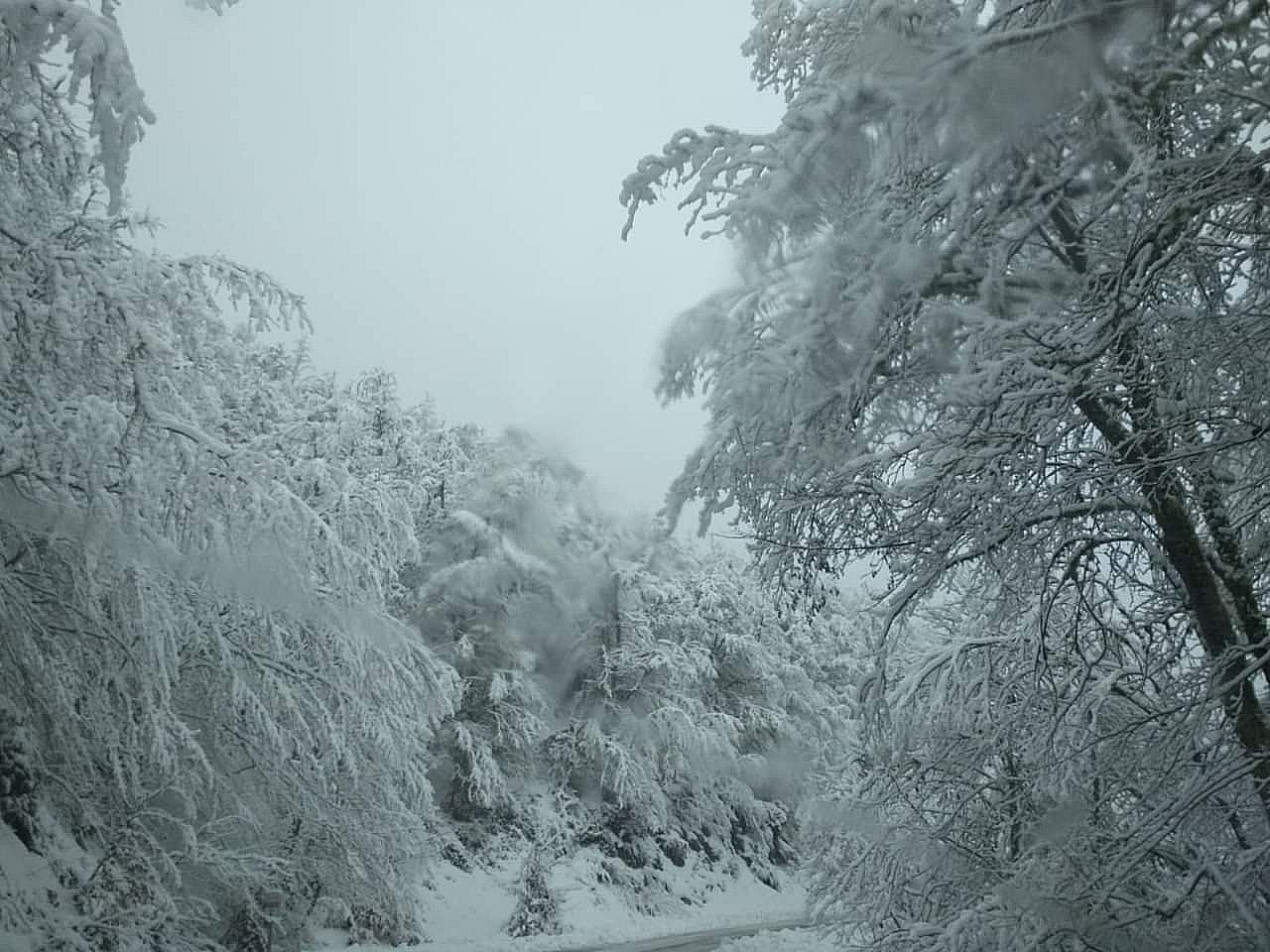 La nieve se instala en Leon