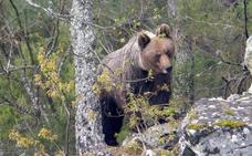 Convivir con el oso