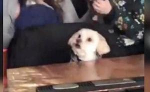 La tierna reacción de un perrito al ver los '101 Dálmatas'