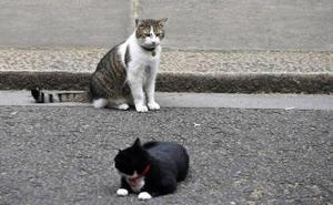 El protocolo para controlar los más de 500 ejemplares de colonias felinas libres de León sigue en el cajón