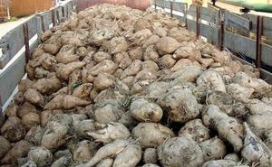 Upa-Coag avisa del «desencanto» del sector remolachero y reclama un AMI que evite la pérdida de productores
