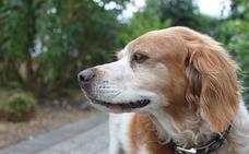 Buscan a un joven que cogió y tiró a su perro contra el suelo en un parque de Navatejera