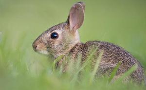 UPA-Coag reclama a Adif que la instalación de las vallas contra los conejos no se limite al AVE
