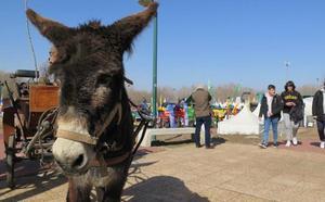 La Feria de Valencia de Don Juan potencia el sector agrícola «como un fondo de armario económico para León y España»