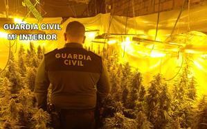 Golpe al narcotráfico en León: dos detenidos y 625 plantas de marihuana incautadas en un laboratorio indoor en Santa Marina del Rey