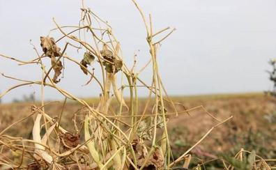 Asaja pide a la Junta que abone ya las ayudas para los intereses de préstamos de la sequía de 2017