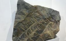 La exposición de fósiles del carbonífero de Fabero ya es una realidad