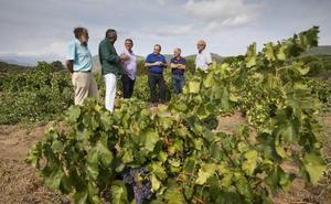 Agricultura convoca las ayudas para reestructuración y reconversión de viñedo en Castilla y León