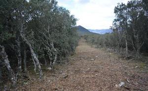 Denuncian la apertura de una pista forestal que pone en riesgo una zona de alto valor ecológico entre Orense y León