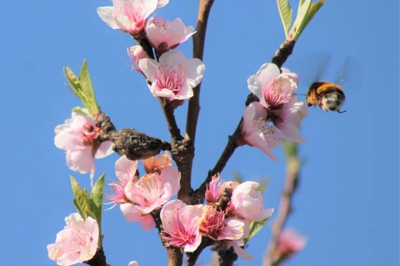 La primavera florece