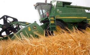 La falta de lluvias perjudica a la siembra de cereal, que cae en 13.000 hectáreas en León