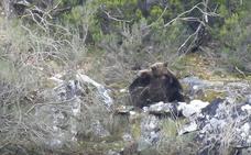 La primavera despierta a los osos