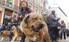'Más que perros' organiza una nueva 'Operación Saco' para recoger alimentos para animales bajo tutela de asociaciones protectoras
