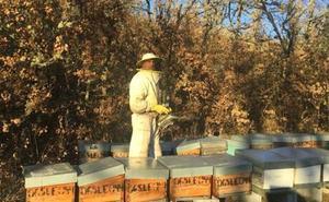 La Junta convocará ayudas a la producción y comercialización de miel
