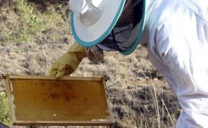 Ayudas a la producción y comercialización de la miel