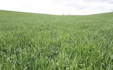 Las lluvias alivian el campo y abren buenas expectativas para el mes de mayo