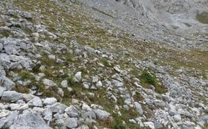 Investigadores de la ULE descubren una nueva especie de hierba perenne que llevará el nombre de Picos de Europa
