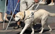 El BOE publica la ley de acceso al entorno de personas con perro de asistencia en Castilla y León