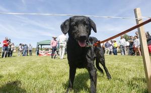Animales, agroalimentación artesanal y el pastoreo se dan cita en la Feria Carea de Cerezales del Condado