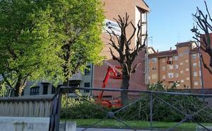 UPL exige al Ayuntamiento de León que deje de podar los árboles en primavera
