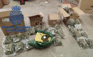 La mayor plantación de marihuana en León ciudad escondía nueve kilos de 'cogollos' entre los escombros
