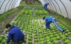 El Ministerio de Agricultura convoca ayudas para formación de profesionales del medio rural