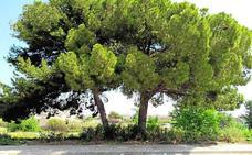 La Junta y Land Life Company plantarán 500.000 árboles este otoño, miles de ellos en León