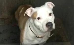 El Ayuntamiento traslada a las puertas de la Protectora un contenedor con un perro peligroso en su interior
