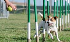 León acoge el evento canino Morcillopen