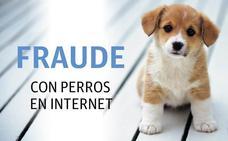 Identifican a una presunta estafadora que vendió un perro por Internet y no lo entregó