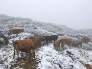 Nevadas en la provincia de León a sólo 10 días del verano