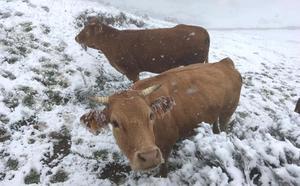 Nieve en León... y a las puertas del verano