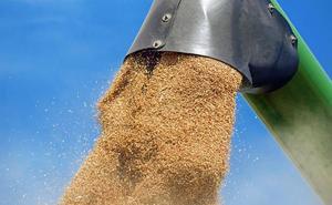 La cosecha de cereal en León cae un 37% y se estabiliza el precio