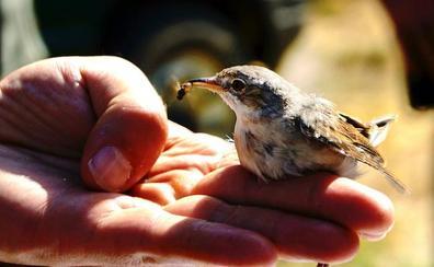 Los mineros que se hicieron amigos de los pájaros