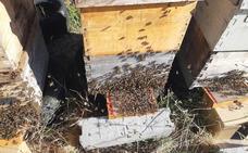 El 35% de las vacunas de España fabricadas con apitoxina se elabora con veneno de abejas leonesas