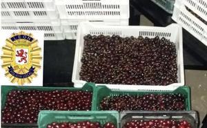 La Policía Local de León interviene 20 cajas de cerezas que estaban siendo vendidas de forma ilegal