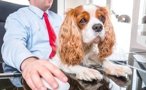 Correos propone a sus empleados que lleven sus mascotas al trabajo el próximo viernes «para aliviar la soledad, la depresión y el estrés»