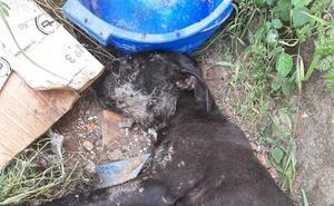 San Andrés mantiene activo el convenio de recogida de animales hasta el 1 de julio