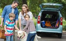El peligro de llevar una mascota en el coche