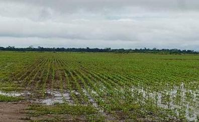 La media de 26 litros por metro cuadrado caídos en los últimos días no alivia la ruina del campo con 10.000 hectáreas perdidas
